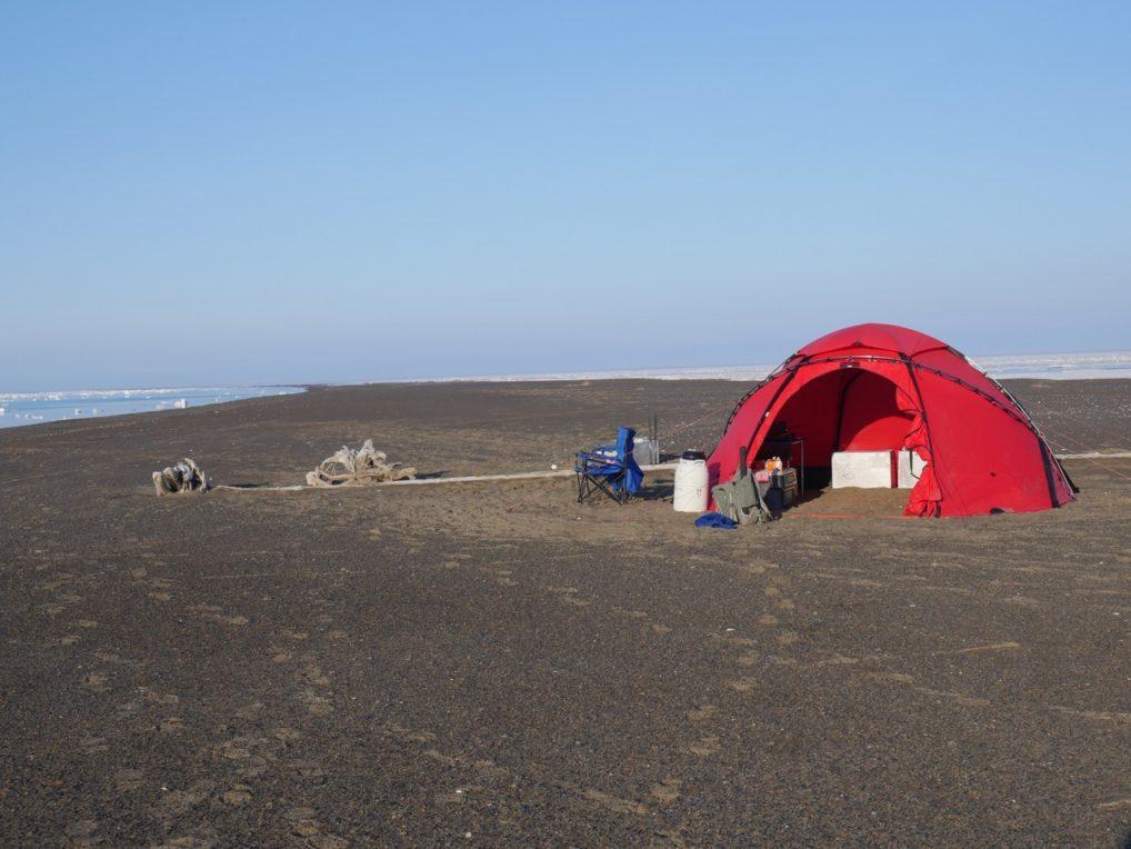 WCS field camp