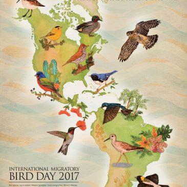 International Migratory Bird Day 2017