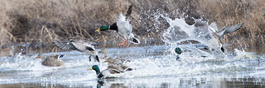 Pacific Birds Habitat Joint Venture