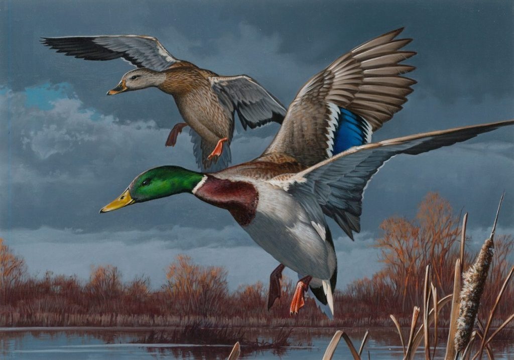 Federal Duck Stamp 2017