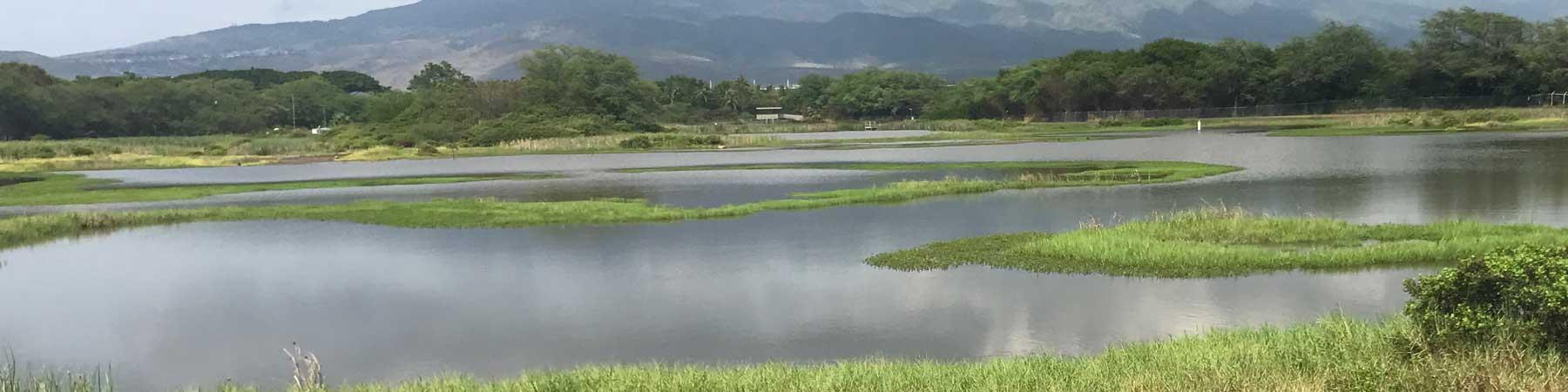 Wetlands By Island