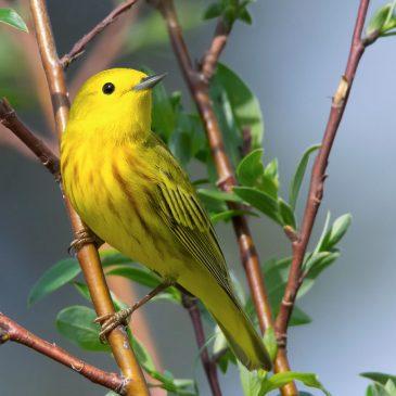 YOTB – Native Plants for Birds