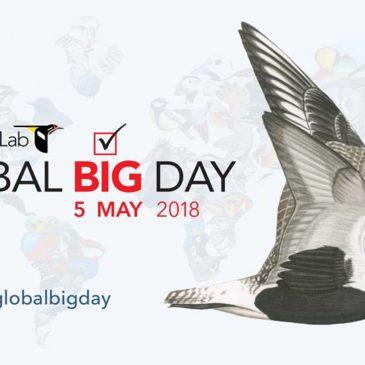 YOTB – Global Big Day