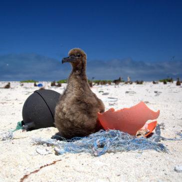 YOTB – Preventing Plastic Pollution