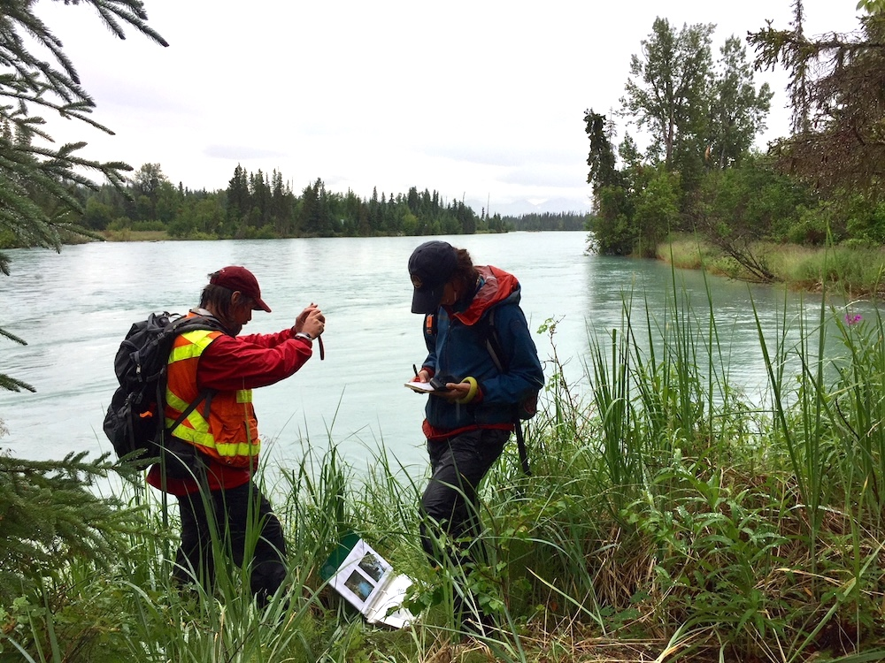 Joel Cooper and Courtney Dodge monitoring along the Kenai River. Lynn Fuller