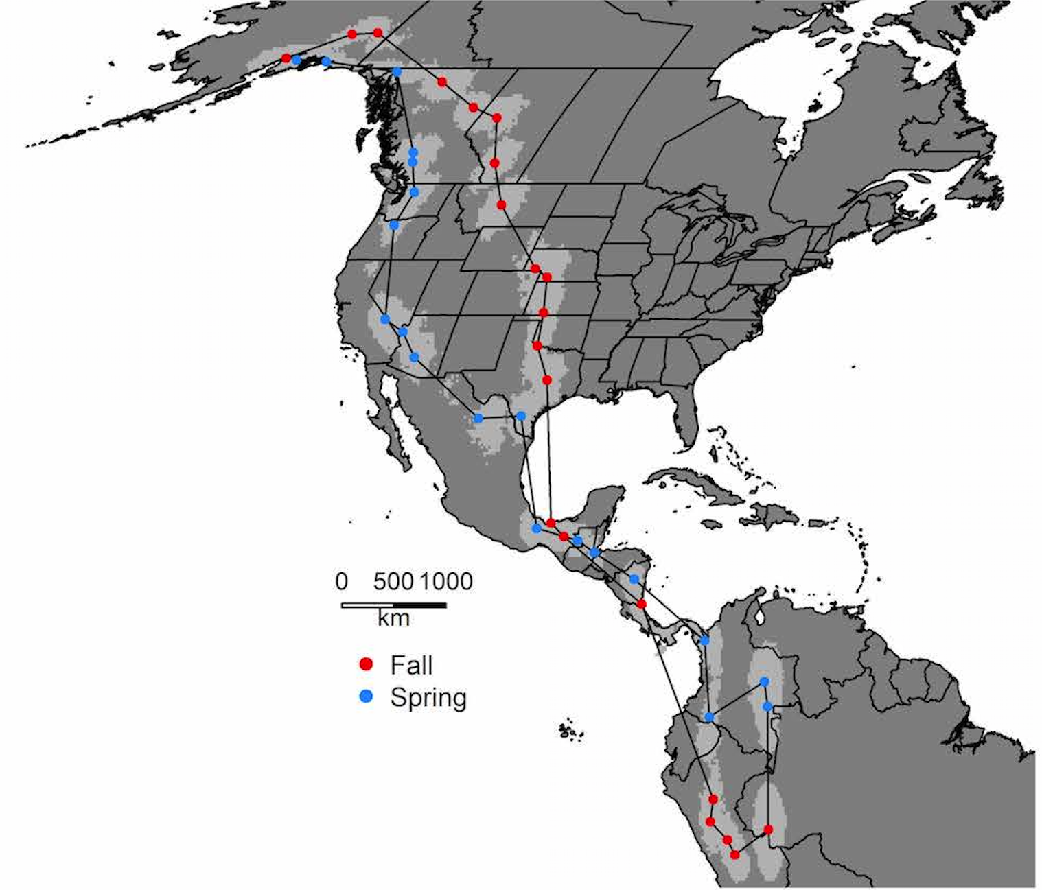 The red and blue dots represent the center of the light gray cloud that surrounds the dots. Each cloud represents places where the birds stopped two or more days. The lines connecting the dots show the shortest distance between points, not the exact route. However, the data behind the map suggest that this bird did cross the Gulf of Mexico en route south, as did about half the Alaska tagged birds. The others traveled along the east coast of Mexico.Map courtesy of Julie Hagelin