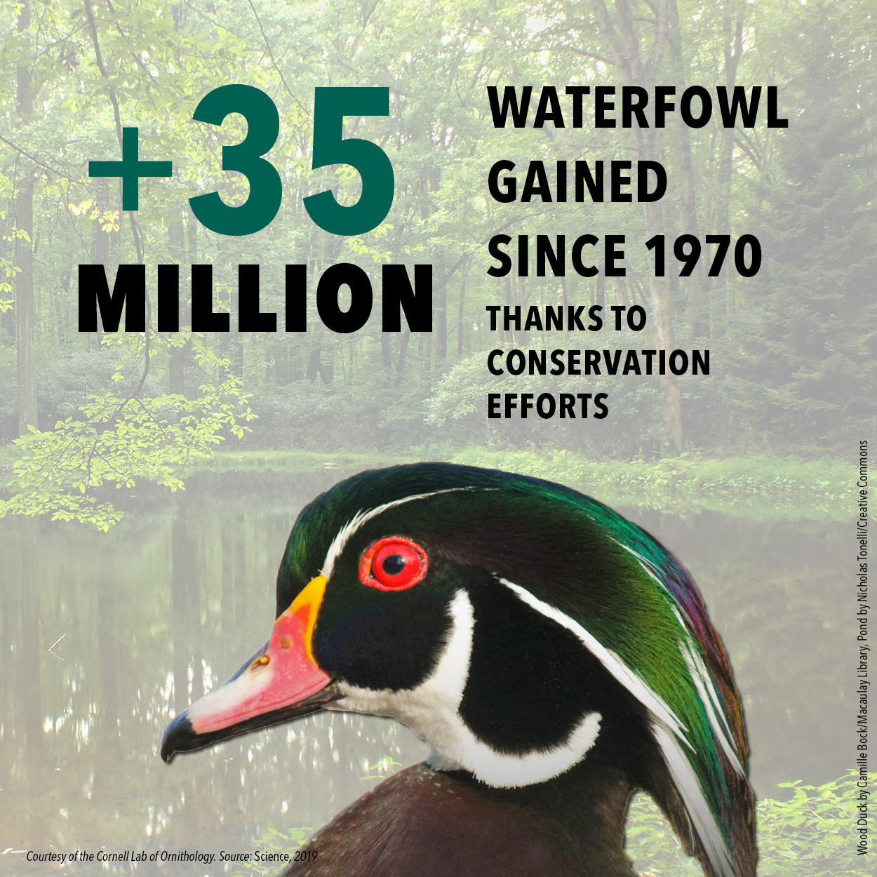 BirdDeclines-gains-waterfowl