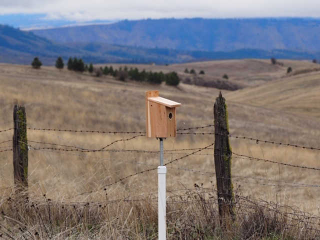 Nest boxes have overall dimenstion, and openings, for specific species although there is some overlap. This box has a guard to prevent other birds from entry and a PVC pipe to discourage mice and snakes. <br>© Mike Mahaffa
