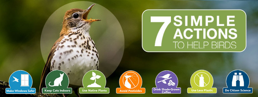 7 actions to help birds