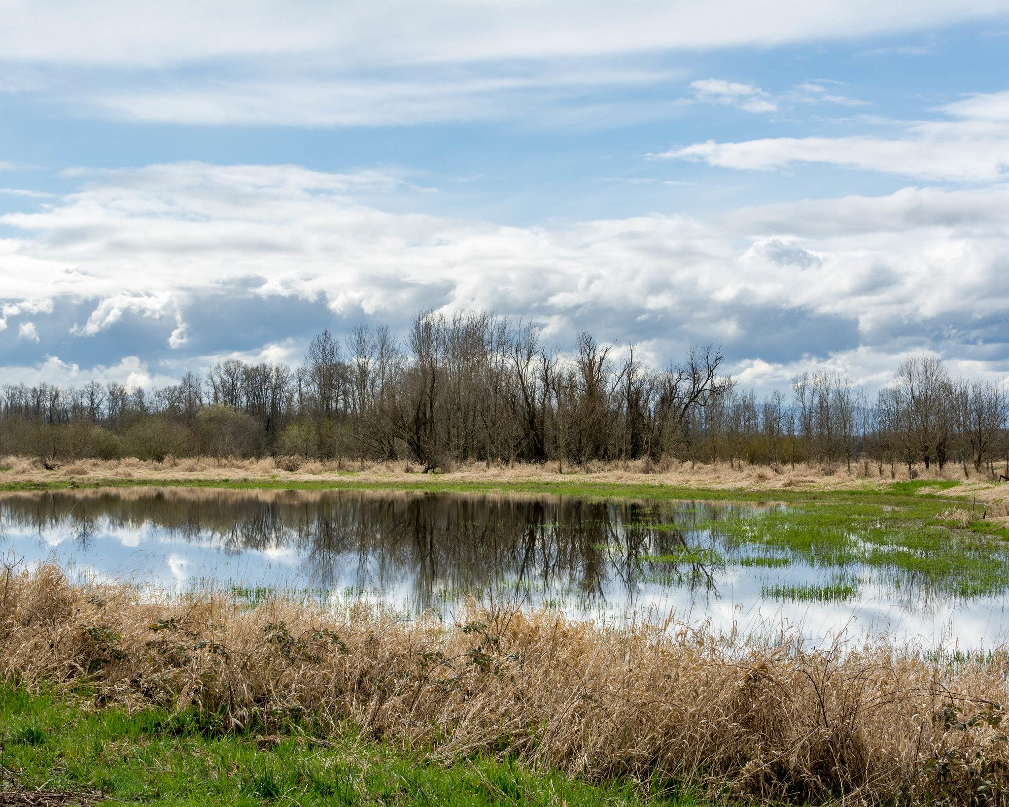 Wetlands Reflections<br>Matthew Warner © Creative Commons