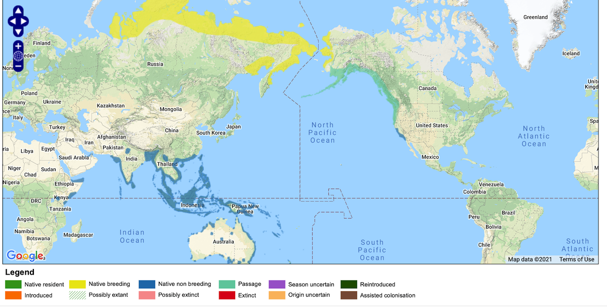 Global distribution of the Pacific Golden-Plover. Click on map to see full extent of the global range and zoom in to see Hawaiian Islands.<br>Map © BirdLife International 2021