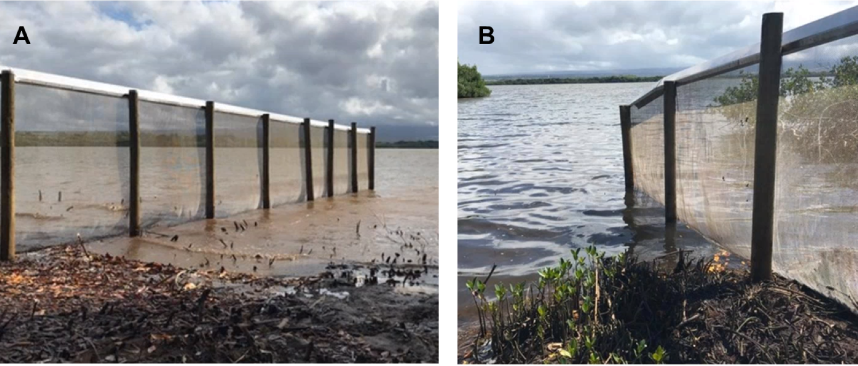 From the paper: The west (A) and east (B) ends of the exclusion fence extending into Pearl Harbor, using the water as a natural barrier to exclude mammalian predators.