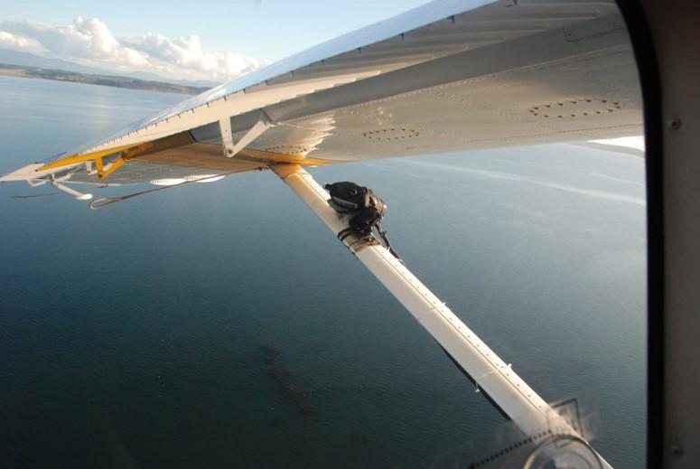 The Salish Sea as seen by aerial surveyors. <br>Matthew Hamer, Washington Department of Fish and Wildlife
