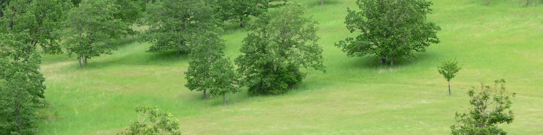 Oak and Prairie Conservation Priority
