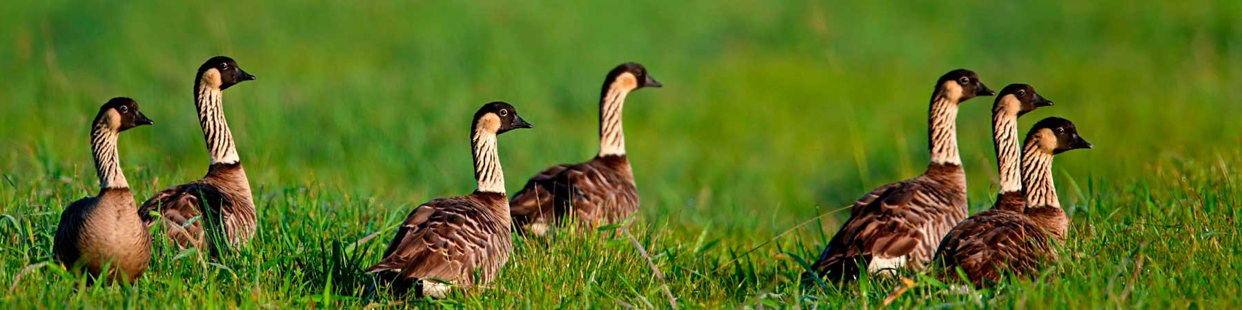 Bird Conservation Plans and Guides