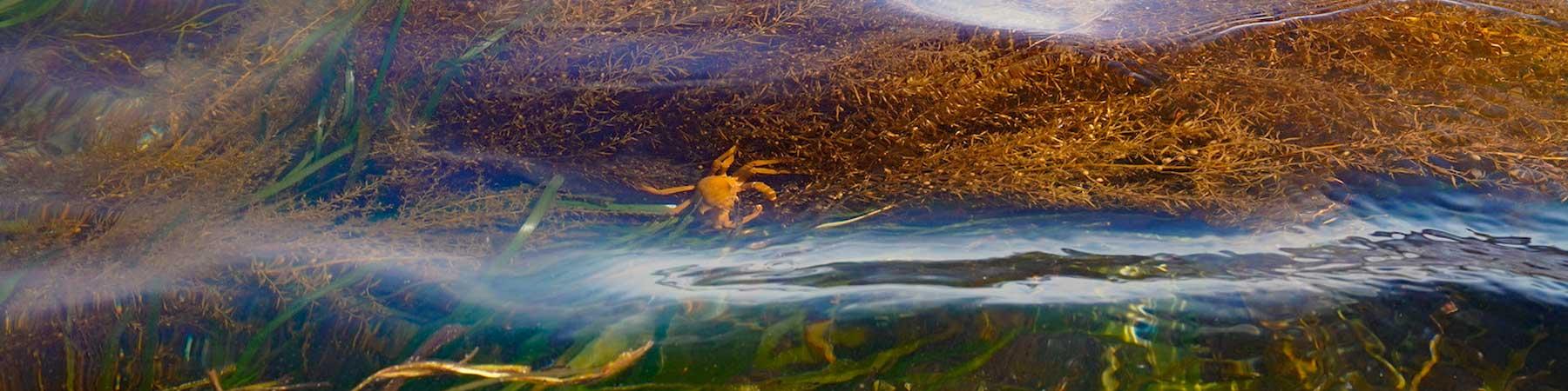 Coastal Wetlands Conservation Priority