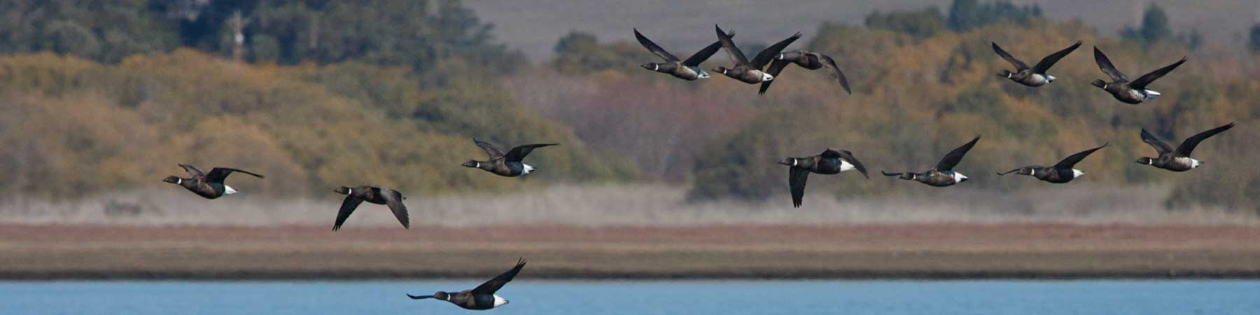 Flyways and Migration