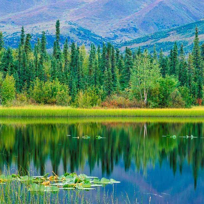 Habitat: Boreal Forest