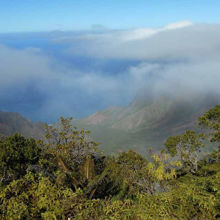 Habitat: Hawaii Montane Forest