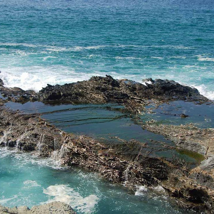 Habitat: Intertidal Rocky Shoreline