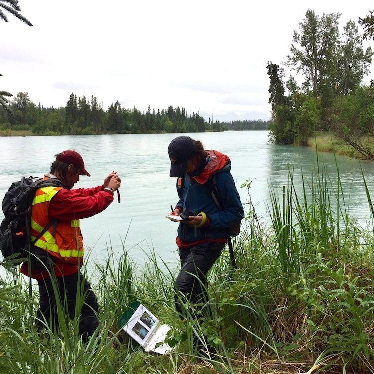 Joel Cooper and Courtney Dodge monitoring along the Kenai River. Lynn Fuller