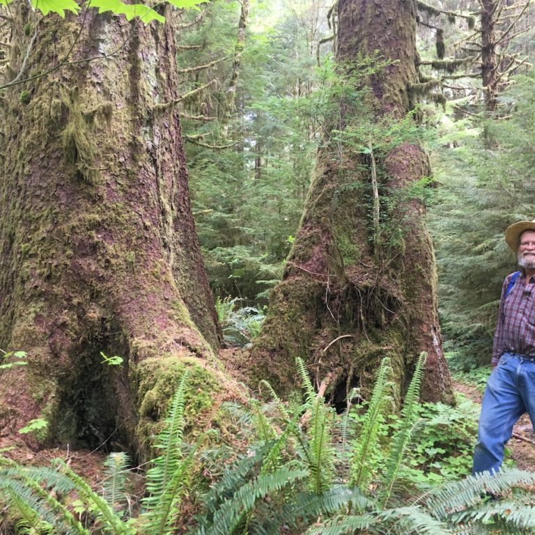 A family donation to the North Olympic Land Trust made the Calawah Conservation Area possible. Pictured: Prior landowner Jim Klahn amidst large Sitka Spruce on the property.