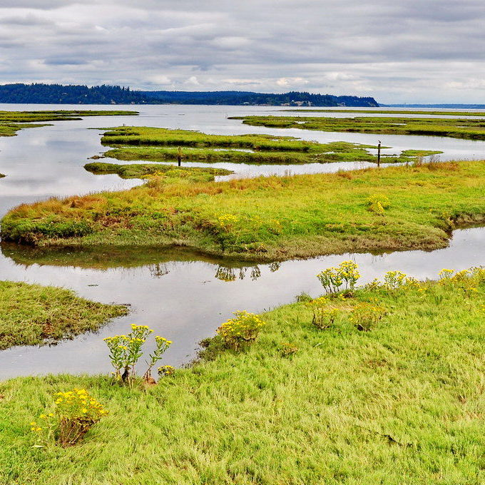Nisqually Estuary / Jim Culp © Creative Commons