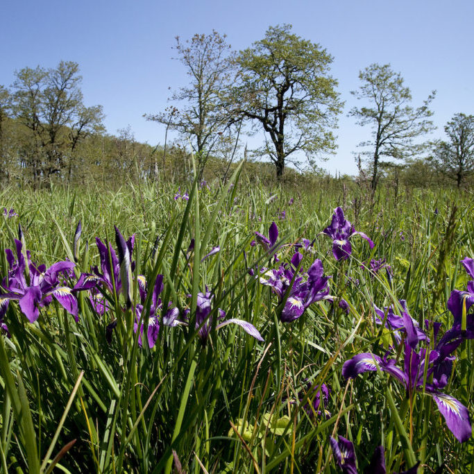 The Noble Oaks property<br>Tim Jewett / The Nature Conservancy