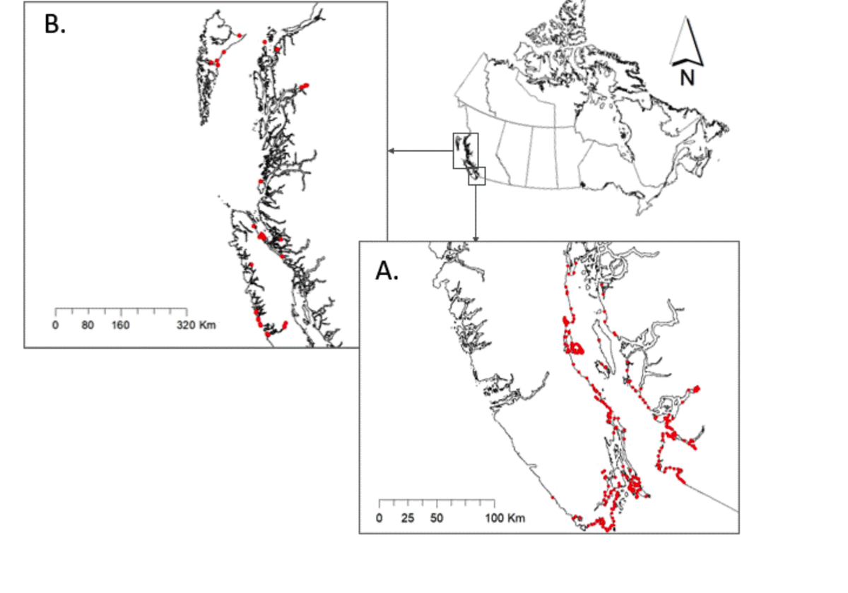 From the paper: Map of the British Columbia Coastal Waterbird Survey (BCCWS) study area in British Columbia, Canada. The study area was divided into two district regions: the inner coastal waters of the Salish Sea (A), and the outer costal waters of the Pacific Ocean (B). Red dots denote the location of survey routes used to collect standardized counts of waterbirds from 1999–2019.