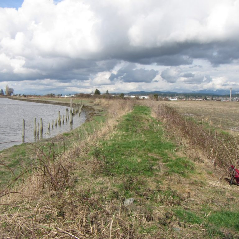 Dike removal helped restore natural ecosystem functions in this coastal wetlands project. Photo Washington State Department of Ecology