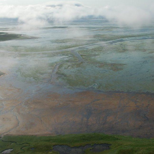 Eelgrass, Izemek Lagoon<br>Kristine Sowl, U. S. Fish and Wildlife Service