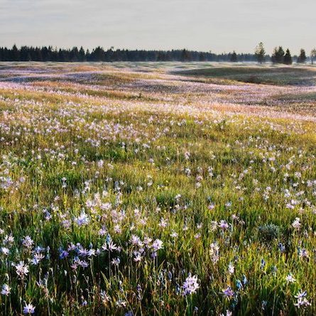 The Glacial Heritage Preserve has received decades of restoration by staff and volunteers from CNLM's South Sound Prairies Program.<br>© Center for Natural Lands Management